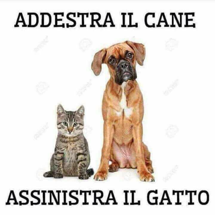 addestra il cane.jpg