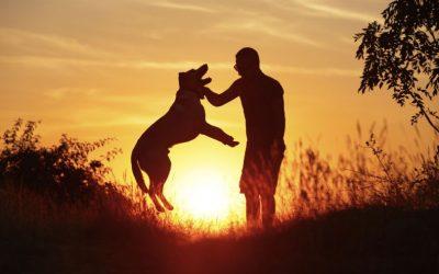Le tre domande fondamentali per la relazione (non solo col cane)