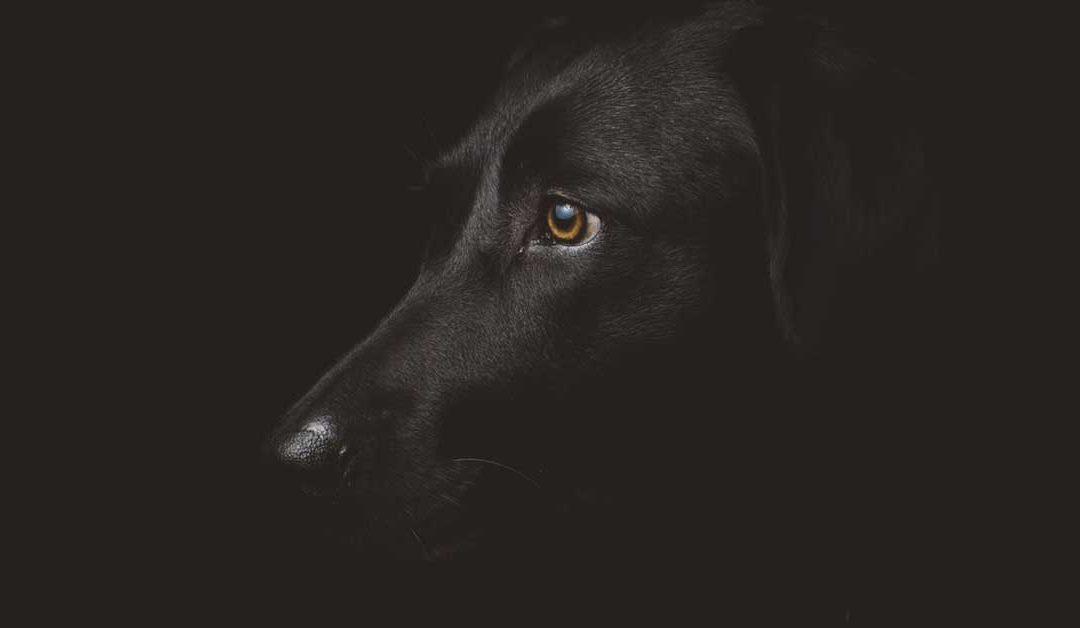 I 5 errori più comuni nella relazione col cane – parte prima
