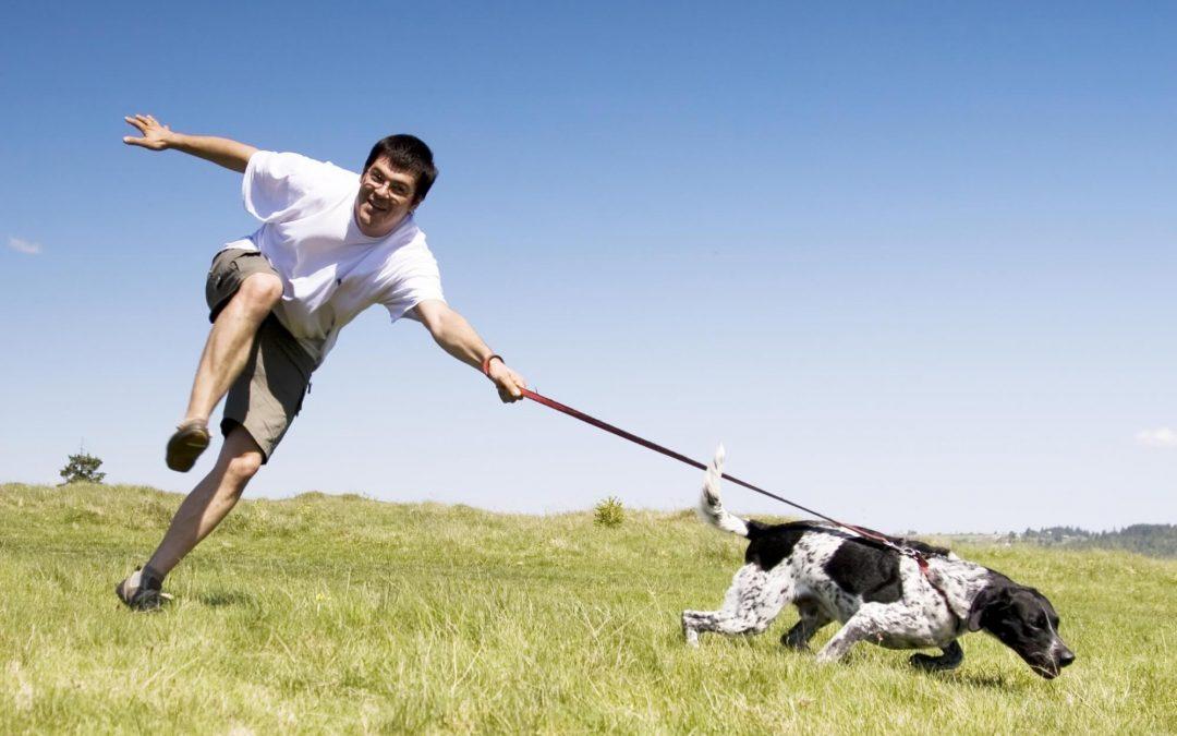 Il tuo cane non ti ascolta? L'educazione cinofila non funziona? Ecco perché …