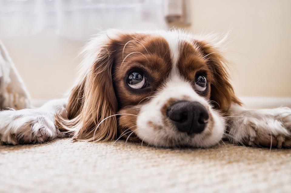 La relazione col cane inizia dalla personalità …