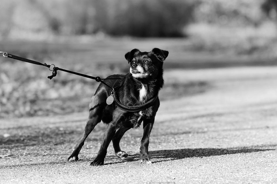 Strumenti di controllo: come li utilizzi ti dice che relazione hai col cane