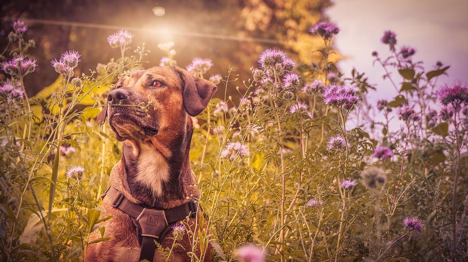 Mindfulness e Relazione col Cane