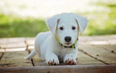 Salvataggio di una cagnolina, Trilli