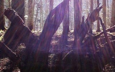 La separazione e la mediazione in bosco