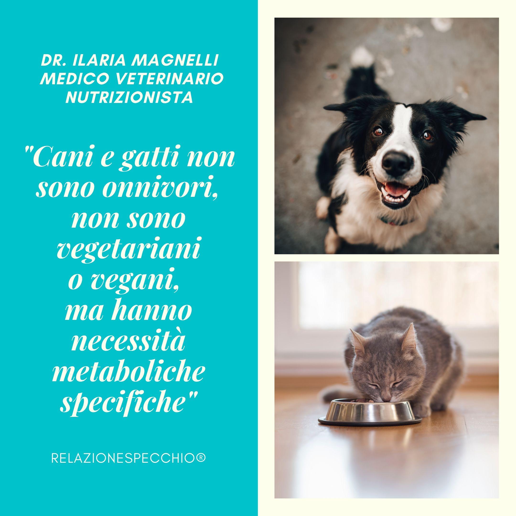 Cani e gatti non sono onnivori e non sono vegetariani o vegani, hanno necessità metaboliche specifiche.